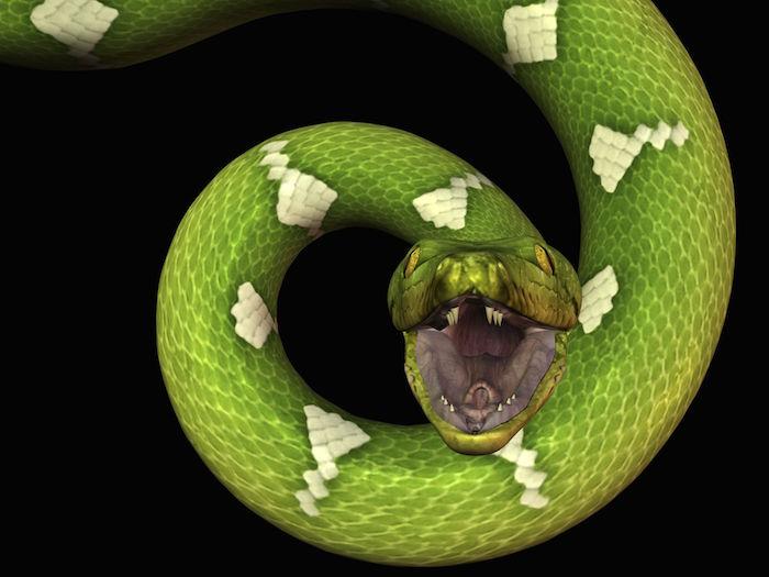 Snake Dreams