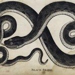 Black Snake Dream