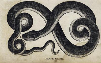 Black Snake Dream Dream Interpretation Amp Symbols