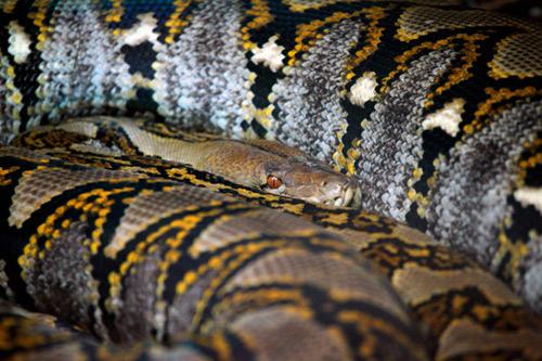 Dreaming of Snakes Everywhere - Dream Interpretation & Symbols