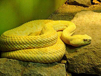 Yellow Snake Dream - Dream Interpretation & Symbols