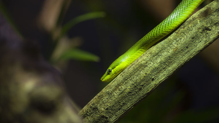 Green Snake Dream - Dream Interpretation & Symbols